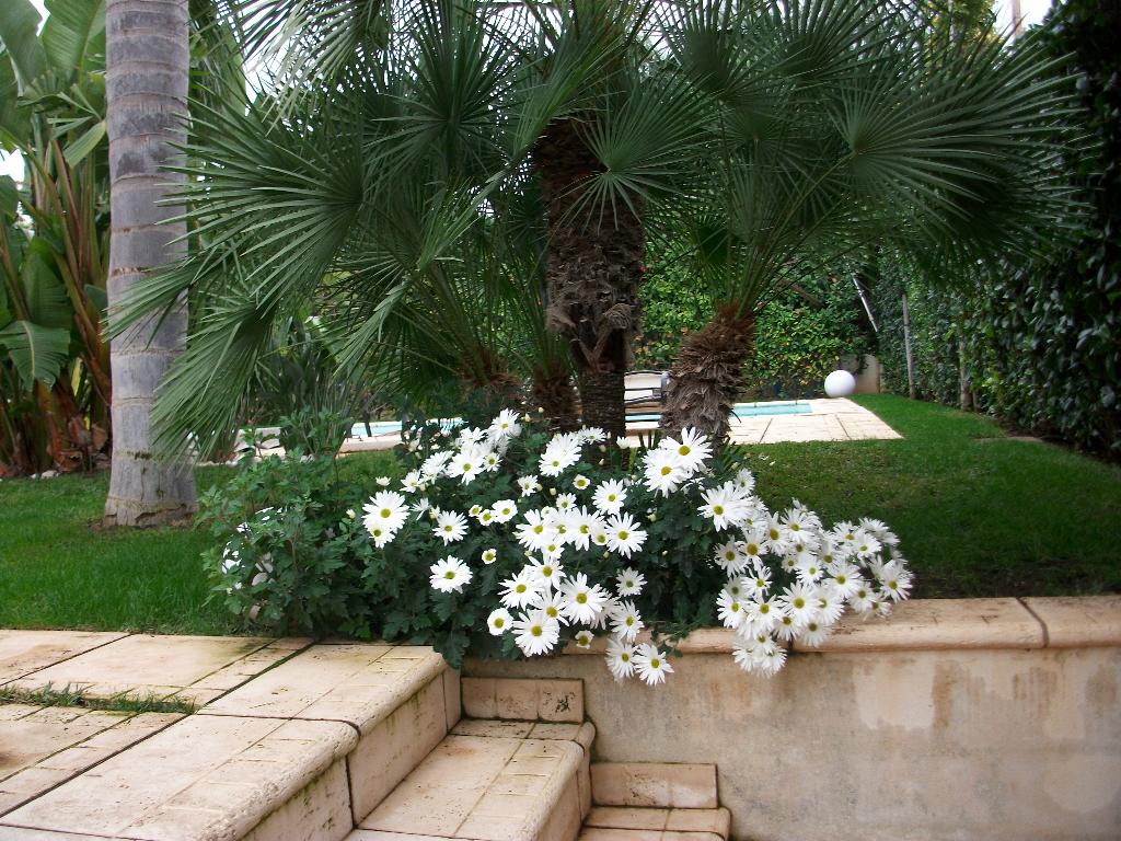 Construcci n de jardines construcci n de piscinas for Mantenimiento jardines